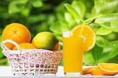 Nya orange fruktsaft och apelsiner i korg på tabellen mot bakgrund av gröna sidor av det orange trädet Tropiska frukter för somma Royaltyfria Bilder