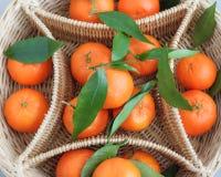 Nya orange mandarinfrukter Royaltyfria Bilder