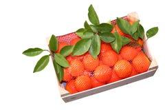 nya orange tangerines Arkivbild