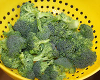 Nya organiska broccoliflorets i durkslag Royaltyfri Bild