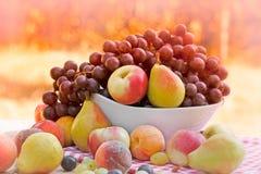 Nya organiska frukter Fotografering för Bildbyråer