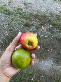 Nya organiska frukter, rött äpple och grön limefrukt, på den mänskliga handen En hand rymmer två nya frukter Arkivfoto
