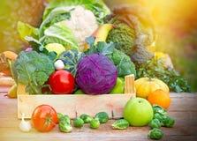 Nya organiska grönsaker Arkivbilder
