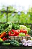 Nya organiska grönsaker i vide- korg i trädgården Arkivbild