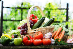 Nya organiska grönsaker i vide- korg i trädgården arkivfoton