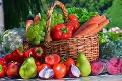 Nya organiska grönsaker och frukter i trädgården Fotografering för Bildbyråer