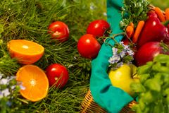 Nya organiska gr?nsaker i vide- korg i tr?dg?rden royaltyfria foton