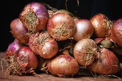 Nya organiska lökar från marknaden Royaltyfri Foto