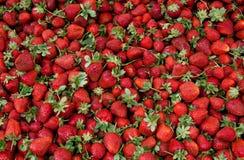 nya organiska mogna strawberrys Royaltyfri Foto