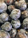 Nya 100% organiska plommoner som tvättas nyligen, och uttorkning Fotografering för Bildbyråer