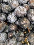 Nya 100% organiska plommoner som tvättas nyligen, och uttorkning Arkivbild