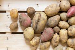nya organiska potatisar Arkivfoton