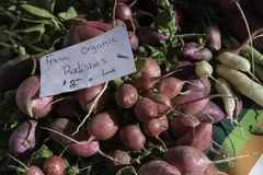 Nya organiska rädisor med ett skriftligt tecken för hand på marknaden Royaltyfria Bilder
