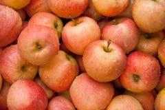 Nya organiska röda äpplen Royaltyfri Fotografi