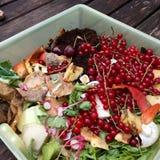 Nya organiska rackar ner på med röda vinbär i en liten plast- hink för återanvändning Royaltyfria Foton