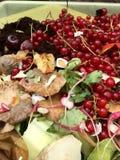 Nya organiska rackar ner på med vinbär i en liten plast- hink Royaltyfri Foto