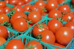 Nya organiska tomater Arkivfoto