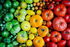 nya organiska tomater Arkivbilder