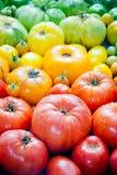 nya organiska tomater Royaltyfria Bilder