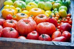 nya organiska tomater Royaltyfri Foto