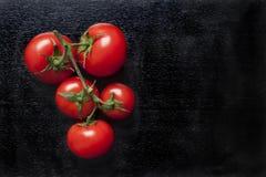 nya organiska tomater för Cherry Royaltyfria Bilder