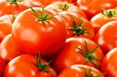 Nya organiska tomater på gatastall Royaltyfria Bilder