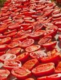 Nya organiska tomater under varma Sun som ska torkas Royaltyfri Bild