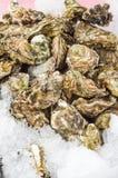 Nya ostron som visas på is Royaltyfri Fotografi