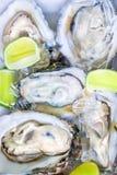 nya ostroner Fotografering för Bildbyråer