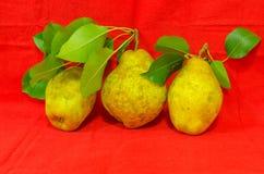 nya pears Royaltyfri Bild