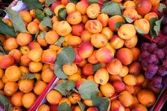 Nya persikor Arkivbild