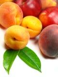 nya persikor för aprikosar Royaltyfri Foto