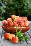 nya persikor för bunke Arkivfoton