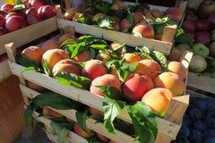 Nya persikor på marknaden Royaltyfria Bilder