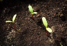 nya plantor Royaltyfria Foton