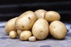 Nya potatisar Casablanca royaltyfria bilder