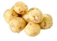 nya potatisar för grupp Royaltyfria Bilder