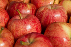 nya äpplen Fotografering för Bildbyråer