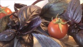 Nya purpurfärgade basilikasidor och röda små körsbärsröda tomater stock video
