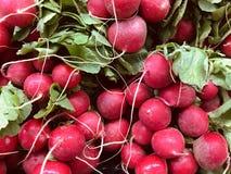 Nya rädisor är en ätlig rotfrukt med en bitter smak royaltyfria foton