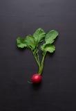 Nya rädisor på en mörk träbakgrund Fotografering för Bildbyråer