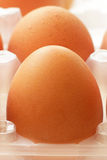 Nya rå ägg i magasincloseup Fotografering för Bildbyråer