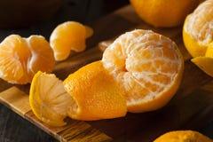 Nya rå organiska mandariner Fotografering för Bildbyråer