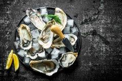 Nya rå ostron på en platta med is-, kniv- och citronskivor fotografering för bildbyråer