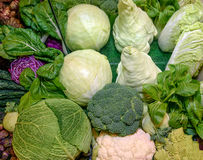 Nya rå ruciferous grönsaker Savojkål röd kål, broccoli, blomkål, kinakål, kålrabbi, romanescobroccoli Royaltyfria Bilder