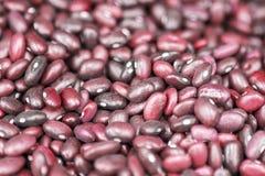 Nya röda bönor som ut jämnt läggas Foto med ett grunt djup av fältet royaltyfri foto