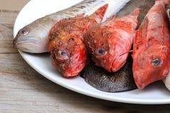 Nya röda fiskar Arkivfoto