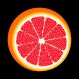 nya röda grapefruktskivor För design Isolerat på svart I en realistisk stil Närbilden Saftiga tropiska frukter moget smakligt vektor illustrationer