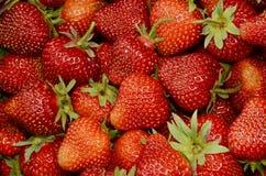 Nya röda jordgubbar Fotografering för Bildbyråer