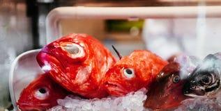 Nya röda Kinmedai eller storartad alfonsino på is för högvärdig japansk sushi arkivfoton